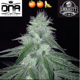 Crockett Family Farms Double Tangie Banana Reg 12 pk