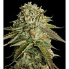 Crockett Family Farms Kosher OG Reg 12 pk