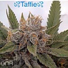 Taffie Reg 12 pk