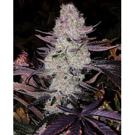 Ethos Genetics Ethos Genetics Grape Diamonds R2 Fem 10pk