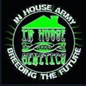 In House Genetics In House Genetics Bluenana Fem 12 pk