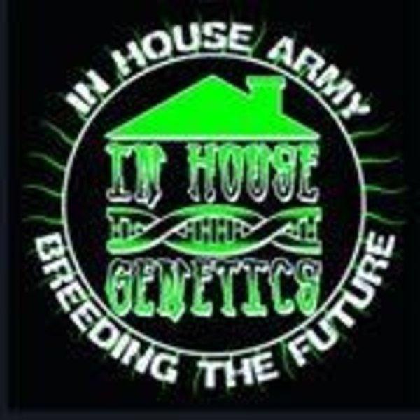 In House Genetics Green Giant Fem 10 pk