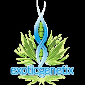 Exotic Genetix Exotic Genetix Green Ribbon Bx3 Reg 10 pk