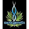 Exotic Genetix Cream & Sugar Reg 10pk