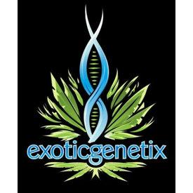 Exotic Genetix Exotic Genetix Cream & Sugar Reg 10pk