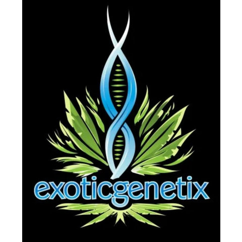 Exotic Genetix Cream & Sugar Reg 10 pk