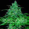 World of Seeds Wild Thailand Fem 7 pack