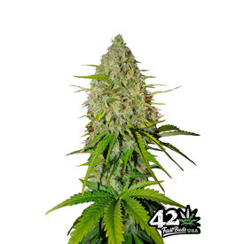 420 Fast Buds 420 Fast Buds Grape Fruit Auto-Fem 5 pk