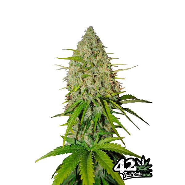 420 Fast Buds 420 Fast Buds Grape Fruit Auto-Fem 5 pk