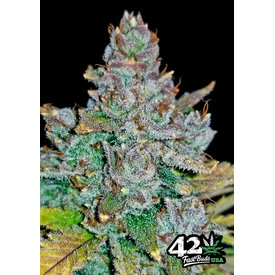 420 Fast Buds 420 Fast Buds Blue Dream'Matic Auto-Fem 5 pk