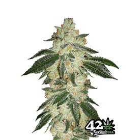 420 Fast Buds Green Crack Auto-Fem 5 pk
