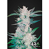 420 Fast Buds Mexican Airlines Auto-Fem 5 pk