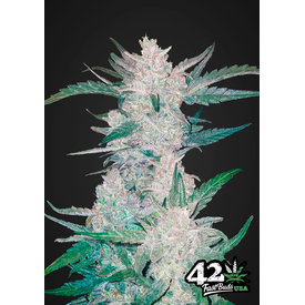 420 Fast Buds 420 Fast Buds Mexican Airlines Auto-Fem 5 pk