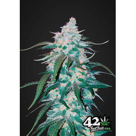 420 Fast Buds 420 Fast Buds Pineapple Express Auto-Fem 5 pk