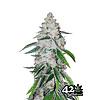 420 Fast Buds West Coast OG Auto-Fem 5 pk