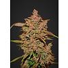 420 Fast Buds Crystal Meth Auto-Fem 5 pk