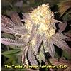 Kingdom Organic Seeds The Tombs Reg 5 pk