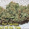 Fat Tuesday Reg 5 pk