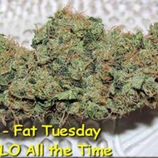 Kingdom Organic Seeds Fat Tuesday Reg 5 pk