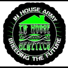 In House Genetics In House Genetics Sugar Cane Fem 5 pk