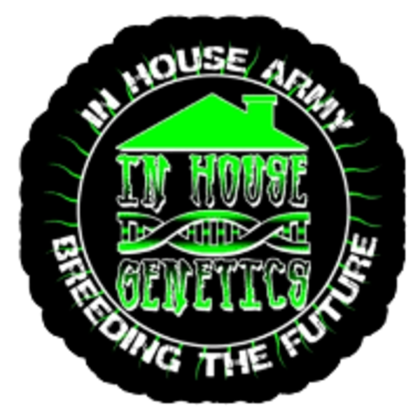 In House Genetics Black Cherry Punch Fem 5 pk