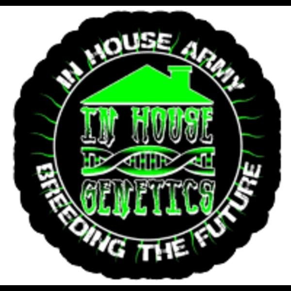 In House Genetics In House Genetics Bananium Fem 6 pk