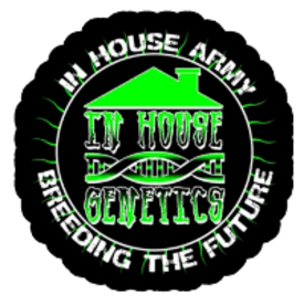 In House Genetics In House Genetics Dirty Banana Fem 5 pk