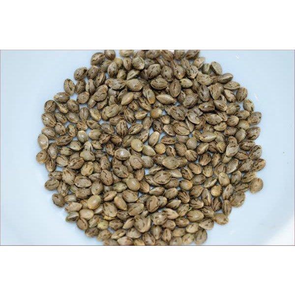 Kingdom Organic Seeds Kingdom Organic Seeds Chunky Cherry Thai Reg 5 pk