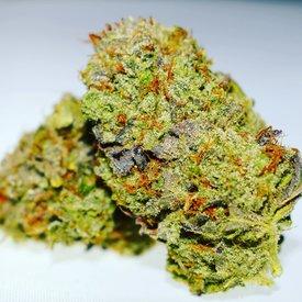 Michigan Marijuana Seed Club The Studio 54 Reg 12 pk