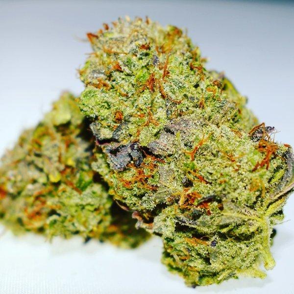 Michigan Marijuana Seed Club MMSC The Studio 54 Reg 12 pk