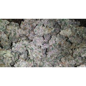 Mosca Seeds Blueberry Gelato Reg 12 pk