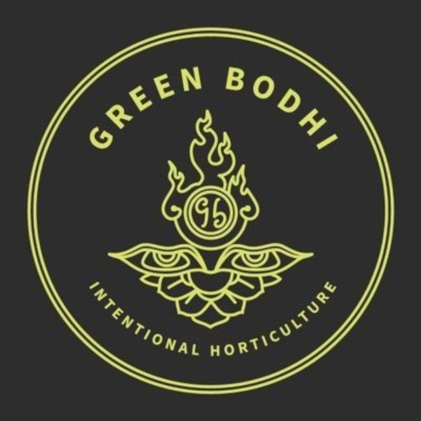 Green Bodhi Dogwalker x SBSE78 Reg 11 pk