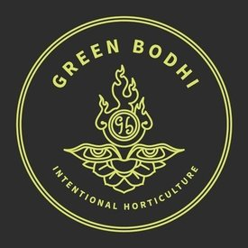 Green Bodhi Green Bodhi SOG x Illusion OG Reg  21 pk
