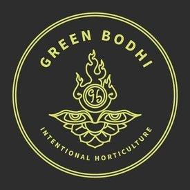 Green Bodhi Green Bodhi Blackberry Octane x Illusion OG Reg 21 pk