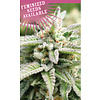 Humboldt Seed Company Magic Melon Auto-Fem 10 pk