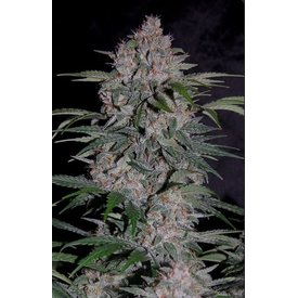Mephisto Mephisto-Artisanals Strawberry Nuggets Auto-Fem 7 pk