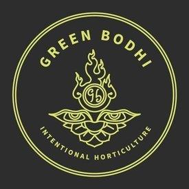 Green Bodhi Green Bohdi SBSE x Sour 78 Reg 11 pk