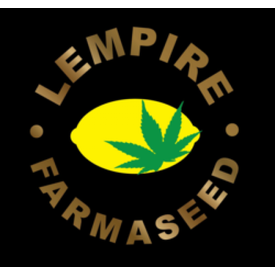 Lempire Farmaseed Chemdog x Limepop Reg 20 pk
