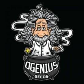 Ogenius Ogenius Kosher OG x Lem OG Reg 20 pk