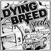 Dying Breed VS Banana Zkittles Reg 10 pk