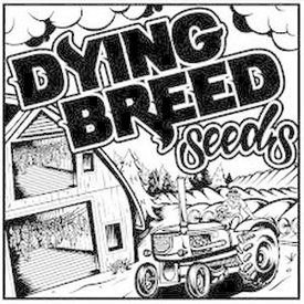 Dying Breed VFH Blackberry Pudding Reg 10 pk