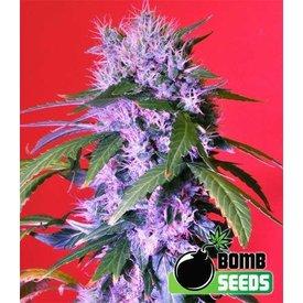 Bomb Seeds Berry Bomb Reg 10 pk