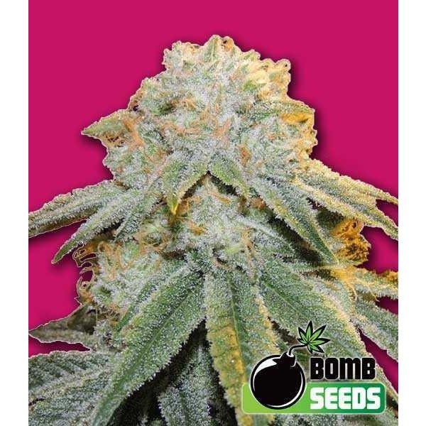 Bomb Seeds Bubble Bomb Fem 5 pk