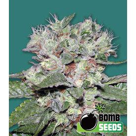 Bomb Seeds CBD Bomb Fem 5 pk