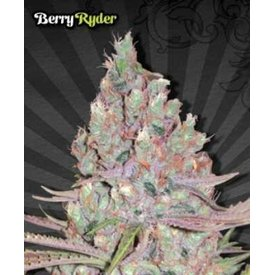 Auto Seeds Berry Ryder Auto Fem 5 pk