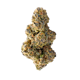 Mega Buds Collosal Purps Fem 5 pk