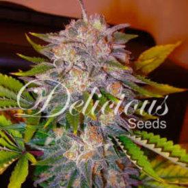 Delicious Seeds Caramelo Reg 7 pk