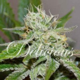 Delicious Seeds Original Juan Herer Reg 7 pk