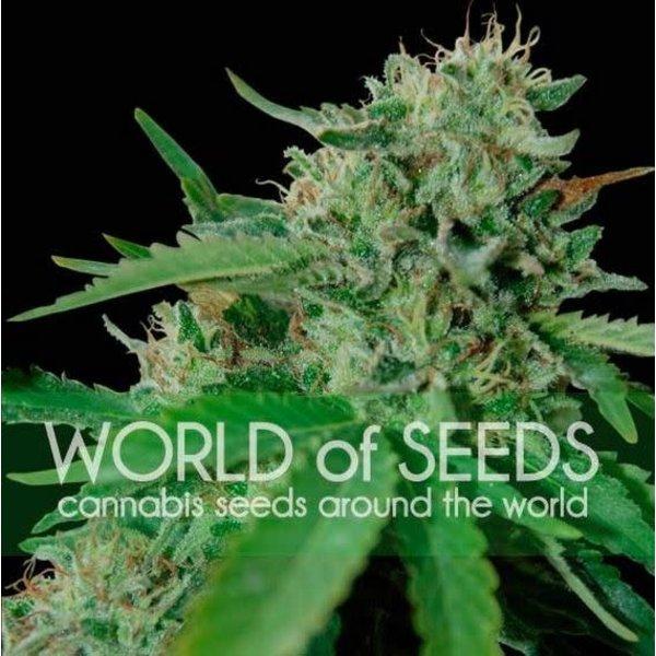 World of Seeds Brazil Amazonia Reg 10 pk