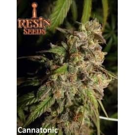 Resin Seeds Resin Seeds Cannatonic Reg 10 pk
